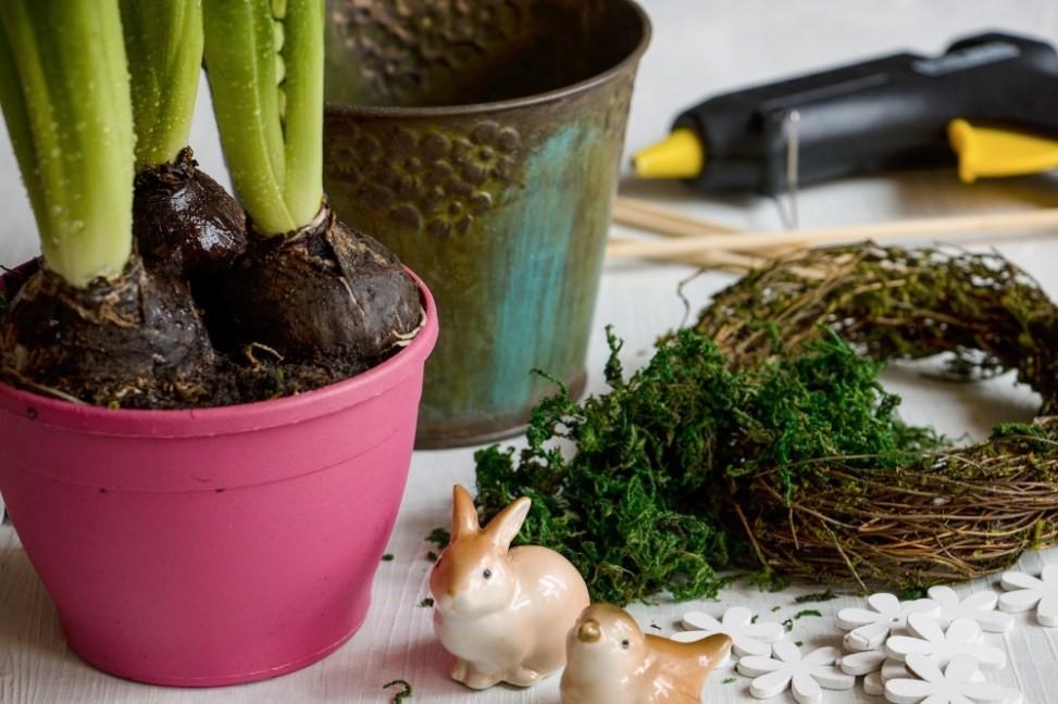 Hyacinty sú kľúčom k jari 2