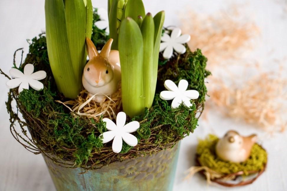 Hyacinty sú kľúčom k jari 4