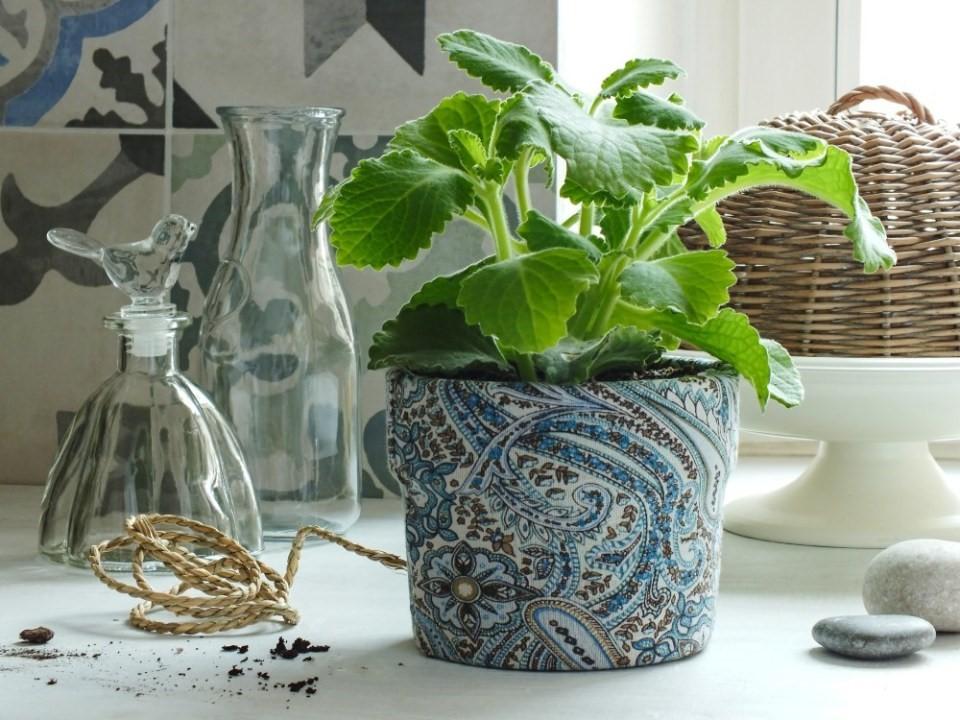 6x zelené bylinky v kuchyni 2