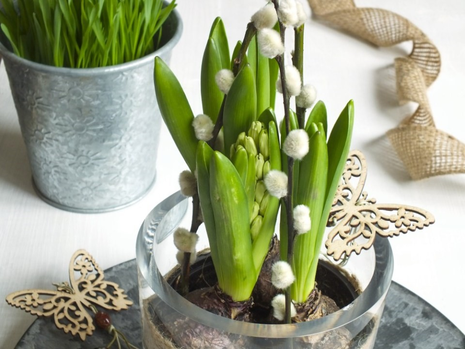 Opora pre Hyacinty 3